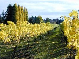 Bed & Breakfast Acomodação: Wine Country em Oregon
