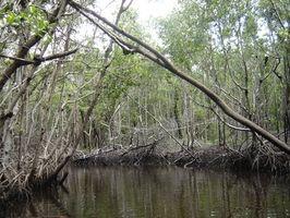 National Park Tours nos Everglades