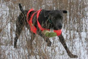 Como caçar com granalha