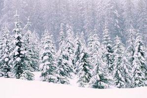 O que você deve fazer quando você está preso em uma nevasca?