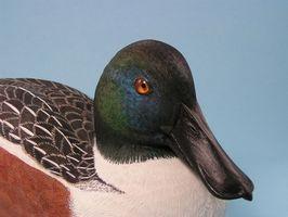 Como configurar Diver Duck chamarizes