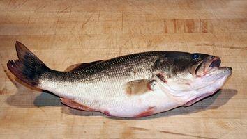 Tipos de Baixo varas de pesca