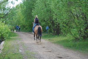 Horseback Tours na França