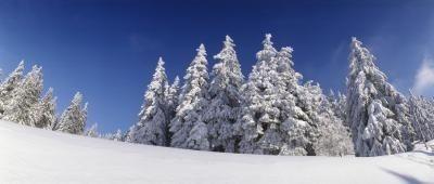 Qual é o clima de inverno Como em florestas de coníferas?